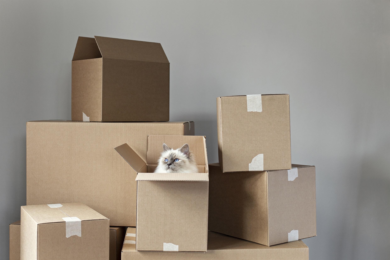 Katt bland flyttkartonger